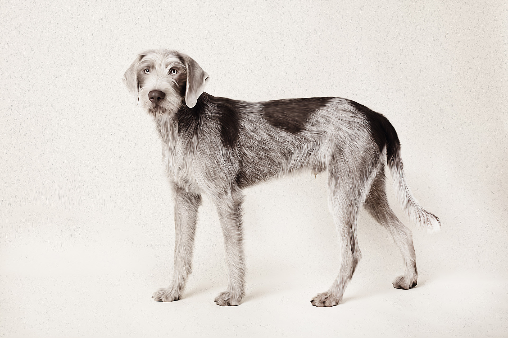 The Artful Dog studio pet photography
