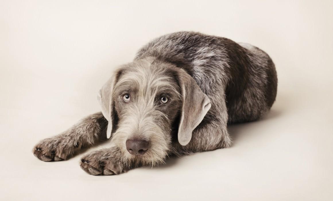 Dog photography studio Guildford