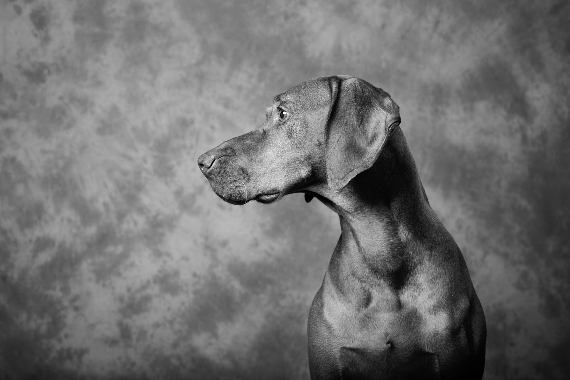 Fine Art Dog Photographer_026