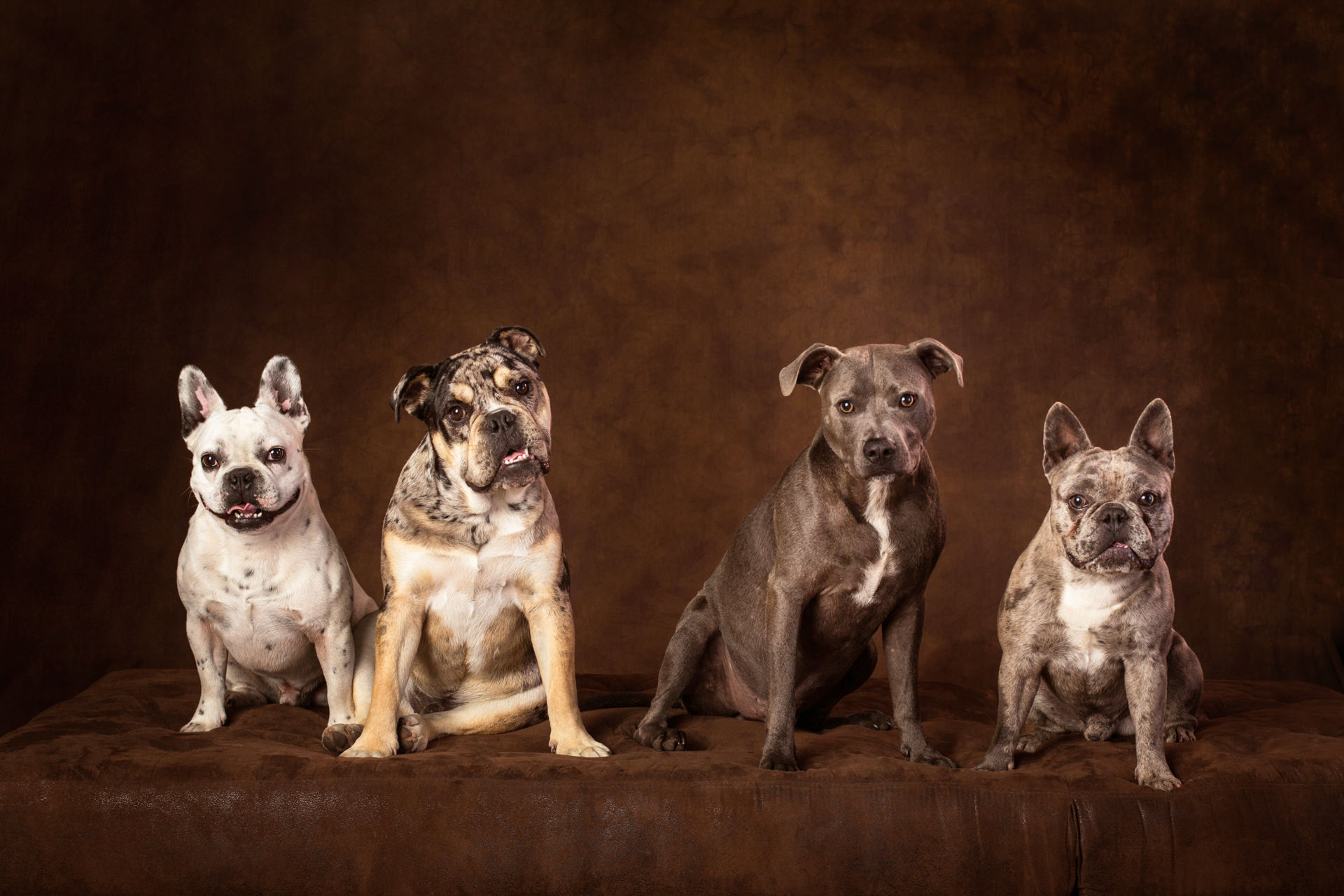 The-Artful-Dog-Studio-Dog-Photographer-10-1