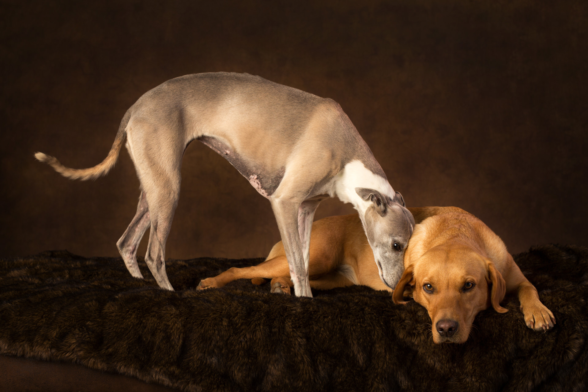 The-Artful-Dog-Studio-Dog-Photographer-11-1