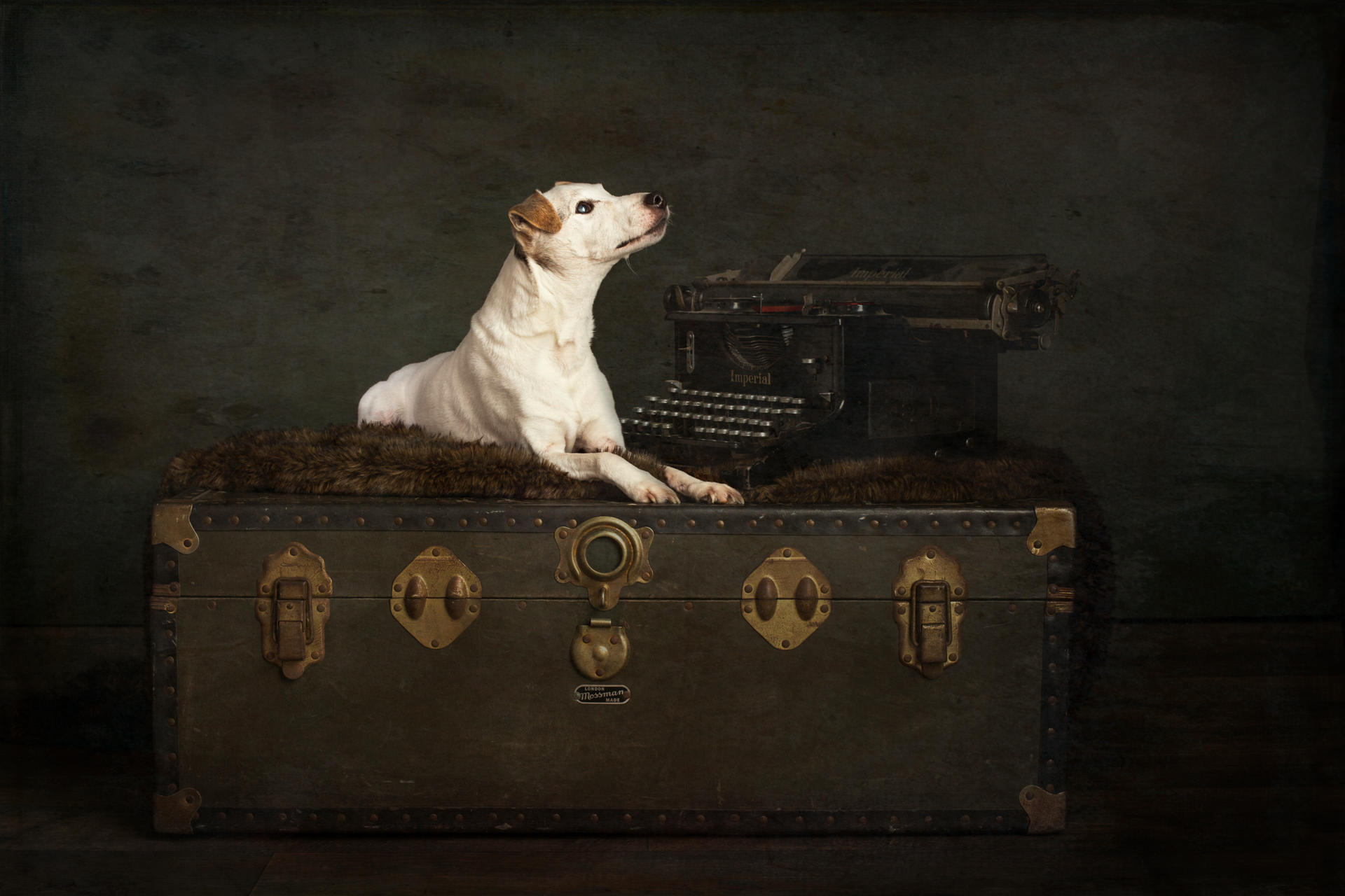 The-Artful-Dog-Studio-Dog-Photographer-15-1
