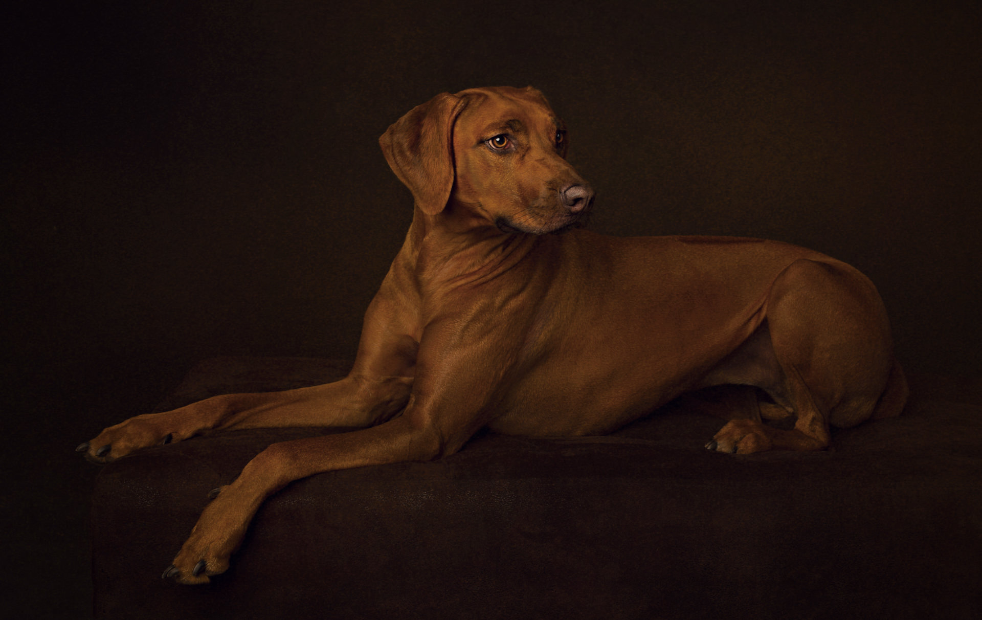 The-Artful-Dog-Studio-Dog-Photographer-19