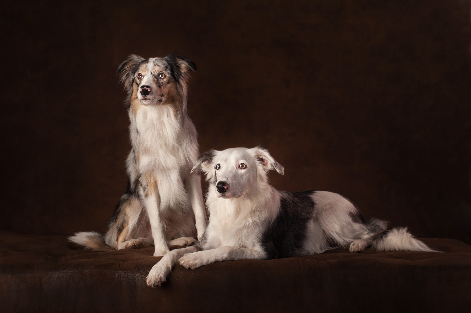 The-Artful-Dog-Studio-Dog-Photographer-2-1