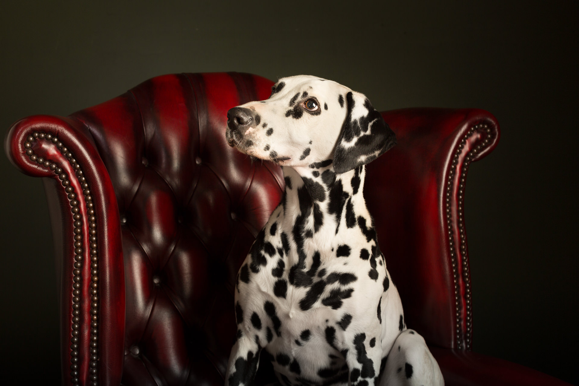 The-Artful-Dog-Studio-Dog-Photographer-5-1