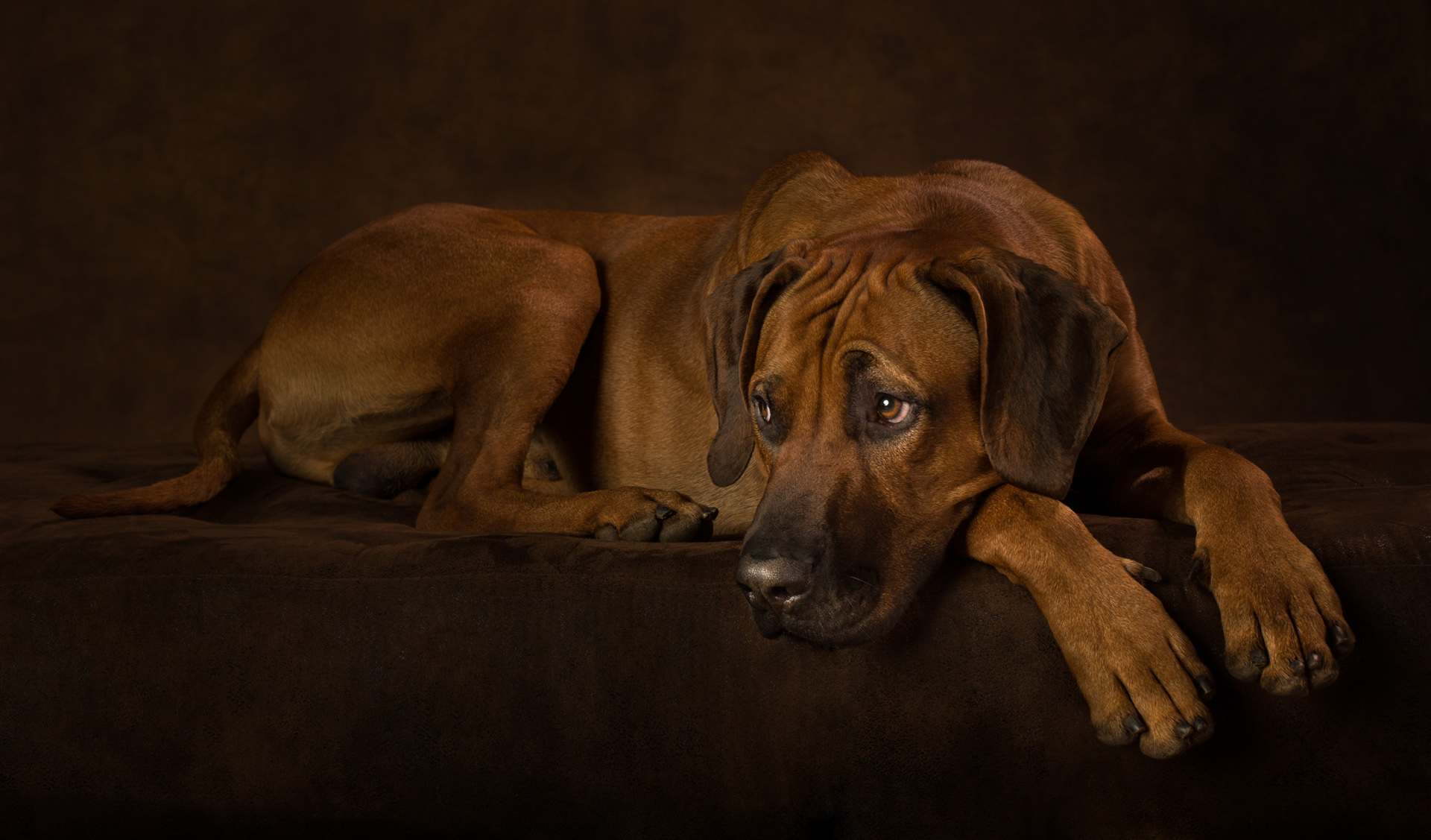 The-Artful-Dog-Studio-Dog-Photographer-7-1