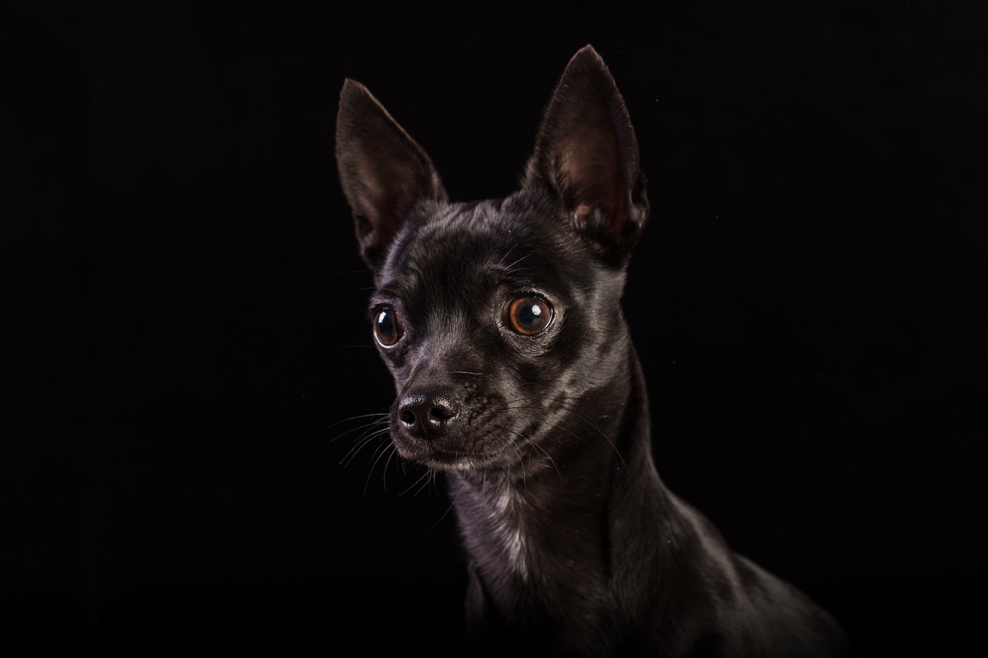 The-Artful-Dog-Studio-Dog-Photographer-8-1